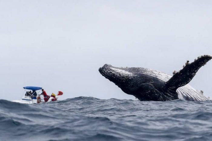 Avistamiento de Ballenas 2021. Plan Todo incluido