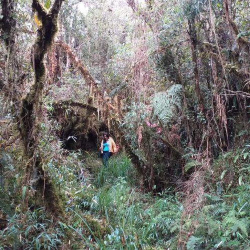 ecoturismo-ecologico